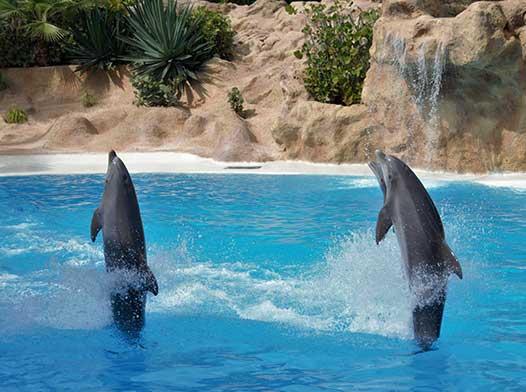 Oferta Tenerife Loro Parc si Siam