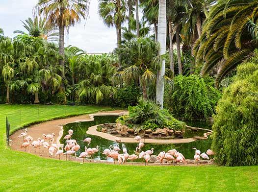Loro Park si Siam Park Tenerife